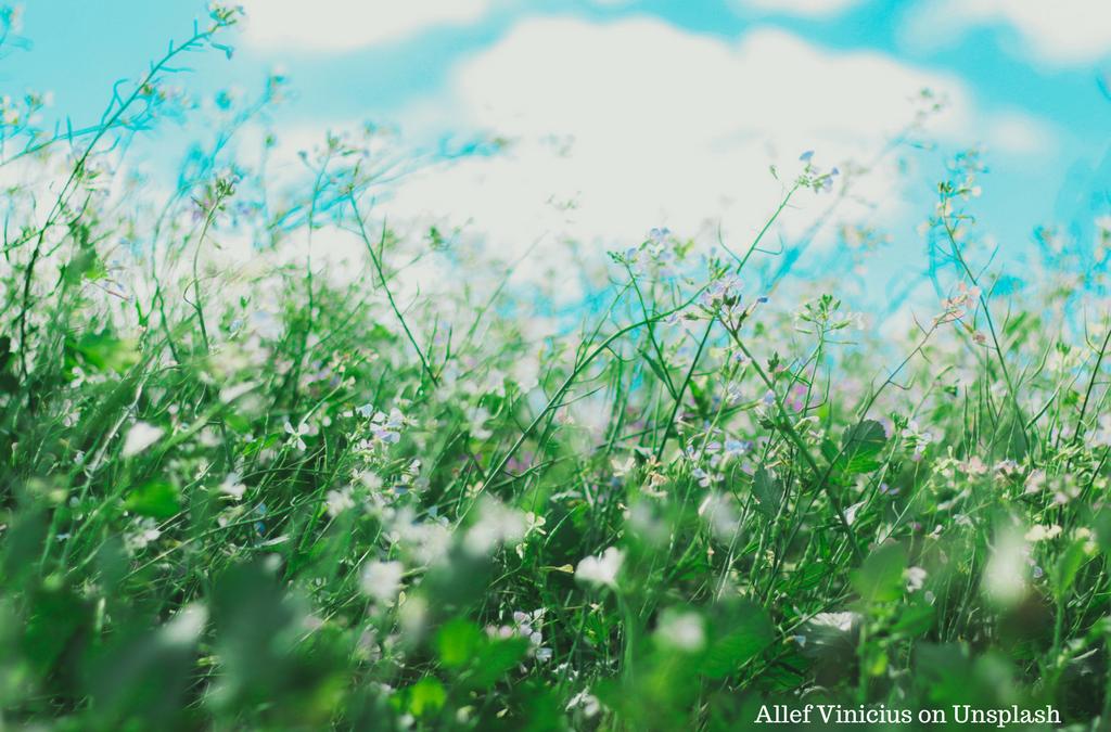 Und wenn Allergien heilbar wären ?  Eine radikal neue Betrachtungsweise zu einer weit verbreiteten Volkskrankheit